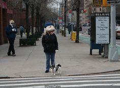 Owen, the Best Dog Doggy Walker!!