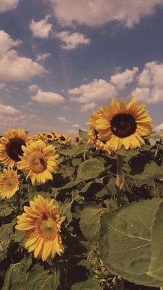 45 Ideas For Flower Art Photography Happiness Aesthetic Backgrounds, Aesthetic Iphone Wallpaper, Aesthetic Wallpapers, Tumblr Wallpaper, Wallpaper Backgrounds, Wallpaper Quotes, Sunflower Wallpaper, Daisy Wallpaper, Nature Wallpaper