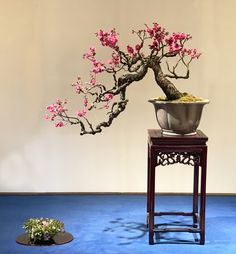 A Private Visit to Omiya Bonsai Village Bonsai Tree Types, Indoor Bonsai Tree, Bonsai Art, Bonsai Garden, Cherry Blossom Bonsai Tree, Cherry Bonsai, Cherry Blossoms, Bonsai Tree Tattoos, Orchid Show