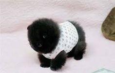 tiny baby animals - Google Search