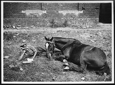 A driver from the British Royal Regiment of Artillery reads next to his horse.