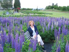 a BENCH in a lupine patch...no wonder she looks so happy seated there