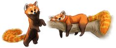 red panda warm-ups from this morning