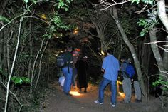 Monteverde Night Tour http://costarica4u.com/rundreisen-mit-shuttle-transport