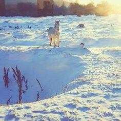 Miss this trip  #tbt #ushuaia #snow #horse #cavalo #neve