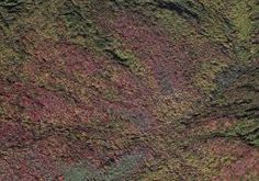 Cucumber Gap Loop | Gatlinburg Tennessee Hikes | Trails.com
