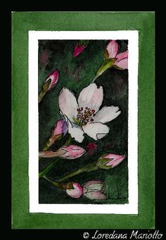 Apple flower   Flickr – Condivisione di foto!