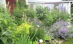 Дача Plants, Plant, Planting, Planets