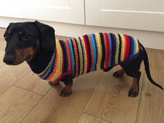 Dachshund Sweater, Dapple Dachshund, Long Haired Dachshund, Dachshund Puppies, Corgi Dog, Knitting Patterns Free Dog, Dog Jumpers, Miniature Dachshunds, Weenie Dogs
