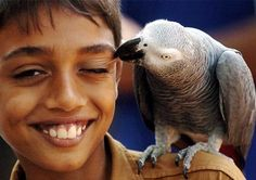Why African grey parrots will enjoy the Nutcracker Suite - Lifestyle - DNA