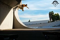 Chris Haslam - Over Vert Judo by Seu Trinh Skateboard Ramps, Skateboard Art, Chris Haslam, Transworld Skateboarding, Style Matters, Bmx Bikes, Wakeboarding, Judo, Self Defense