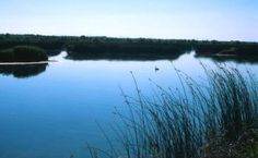 Market Lake WMA is located near the town of Roberts. From Interstate 15, take exit