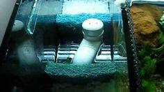 sump filter DIY freshwater filtration canister media HOB aquarium large fish tank, via decorating ideas gifts Aquarium Setup, Diy Aquarium, Saltwater Aquarium, Aquarium Ideas, Large Fish Tanks, Sump, Arts And Crafts Projects, Holiday Sales, Fantasy World