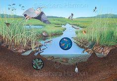 Salt Marsh Food Web Mural  by Barbara Harmon