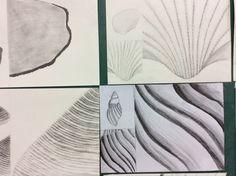 Aula de conchas