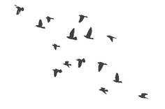 flock of birds tattoo…flying from a field maybe?