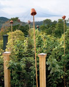 How to Protect Berry Bushes from Birds  -- Whether they're from the North or South, birds love Alabama's state fruit, blackberries. If they're enjoying yours before you get the chance, set up this low-tech line of defense: Drive bamboo stakes into the ground around the perimeter of the berry patch. Perch flowerpots on top, and cover with bird netting, which you can find at garden centers.