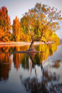 Wanaka Tree Sunrise by Simon Phelps