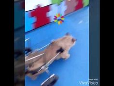 O passeio do meu cãodeirante - YouTube Meu velhinho curtindo seu passeio .....muito feliz