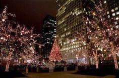 christmas-tree-lighting-718x476