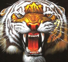 Asian Orange Tiger exotic ferocious lion Oil Painting Art Black Velvet J24 A57