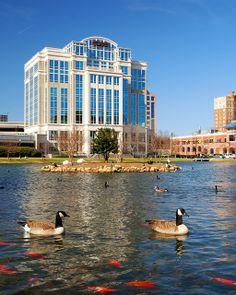 Feed the ducks at Big Spring Park! Alabama Outdoors, Huntsville Alabama, Big Spring, Sweet Home Alabama, Skyline, United States, Tours, Roll Tide, Beautiful Scenery
