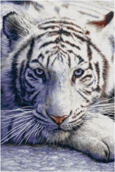 The White Tiger  cross stitch pattern- white tiger gobelin-tiger petite point-wildlife cross stitch - pinned by pin4etsy.com