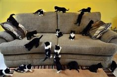 And The Third Invasion On The Living Room (1501)
