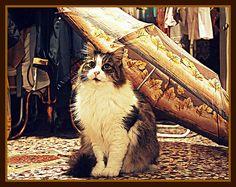 cats:)))