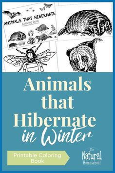 With these hibernating animals pictures, we are learning about the general rule of thumb on animals that are mammals, reptiles, insects and amphibians that hibernate in Winter. Winter Activities For Kids, Winter Crafts For Kids, Kids Learning Activities, Dinosaur Activities, Winter Ideas, Kids Crafts, Animals That Hibernate, Hibernating Animals, Montessori Materials