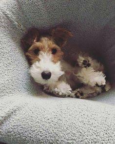 WFT pup hiding...