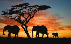 La ruta de la baronesa Blixen #memoriasdeáfrica #África