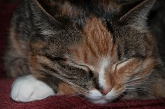 My cat Mango by Heather and Mike, via Flickr