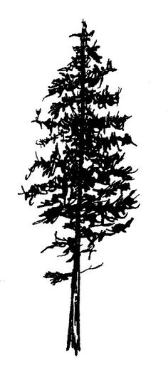 White pine tree tattoo