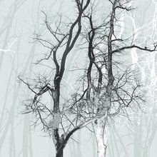 Wall mural - Wander Wood Frost