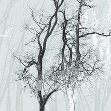 Fototapete - Wander Wood Frost