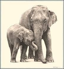 Jumbo family' - asian elephants - fine art pencil drawings www. Pencil Drawings Of Animals, Realistic Pencil Drawings, Art Drawings, Asian Elephant, Elephant Art, Elephant Drawings, Fantasy Angel, Elephant Pictures, Art Simple