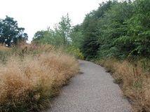 deschampsia cespitosa, tufted hairgrass on left