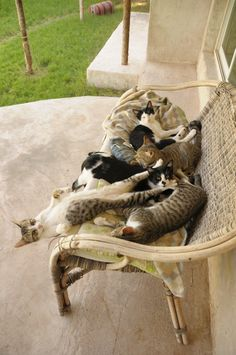 Bench full of cats - the one all stretched out, funny