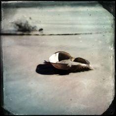 Beach Photography - Black and White Photography - Beach Home Decor Wall Art - Still Life - Horse Shoe Crab. $10.00, via Etsy.