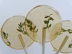 Orange Blossom Thyme - Lollipop