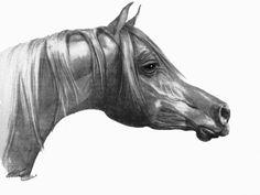 Graphite Drawing Arabian Horse. by iwakoshi. see at: www.sweetpeaandgummybear.etsy.com