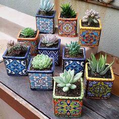 garden care tips Top Pflegetipps fr gl - Succulent Gardening, Cacti And Succulents, Planting Succulents, Succulent Boxes, Planters Flowers, Gardening Tips, Garden Care, Deco Cactus, Cactus Types