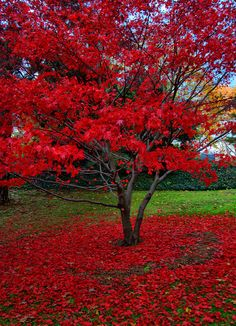 ~~Mt Auburn Cemetery ~ Autumn, Watertown, Massachussetts by hbp_pix~~