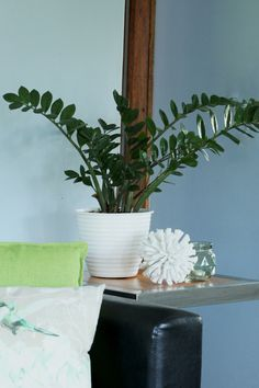 The ZZ plant (Zamioculcas zamiifolia) is one of the most Instagram-worthy houseplants and for good reason too. This plant is drought tolerant, can survive low light conditions and even withstand a fair bit of neglect. Gift this to a friend who has the ability to kill a cactus and they will be best of friends. #zzplant #Zamioculcas zamiifolia #indoorplant #houseplant #lowwaterneeds #easyplant #nofuss #lowlight Zz Plant, Instagram Worthy, Drought Tolerant, Low Lights, Houseplants, Indoor Plants, Cactus, Survival, Friends