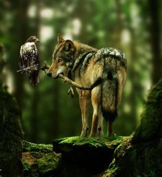 Wolf and Hawk