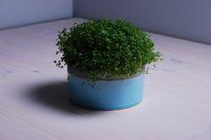 Donica ceramiczna wykończona niebieskim szkliwem z mikropęknięciami. Ozdobi parapet każdego miłośnika minimalizmu.