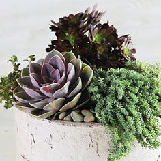 How to Plant a Succulent Container Garden. Succulent gardens are ideal for absentminded gardeners; the plants will thrive even if you forget to water them. Succulent Gardening, Garden Plants, Container Gardening, Indoor Plants, Gardening Tips, Organic Gardening, Vegetable Gardening, Indoor Garden, Potted Plants