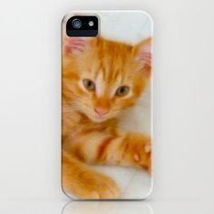 Quo - Kitten Photography By Giada Rossi iPhone & iPod Case by Giada Rossi - $35.00