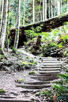 Go hiking in the Blue Mountains near Sydney - Bucket List for Australia